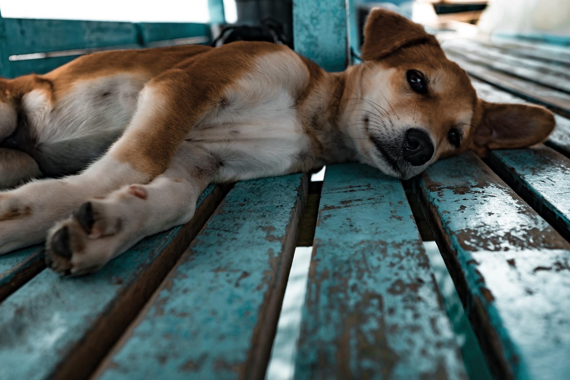 Petit chien - conciergerie animale bordelaise Cyclo Pet's-visites et promenades